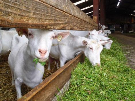 Повышение продуктивности животных