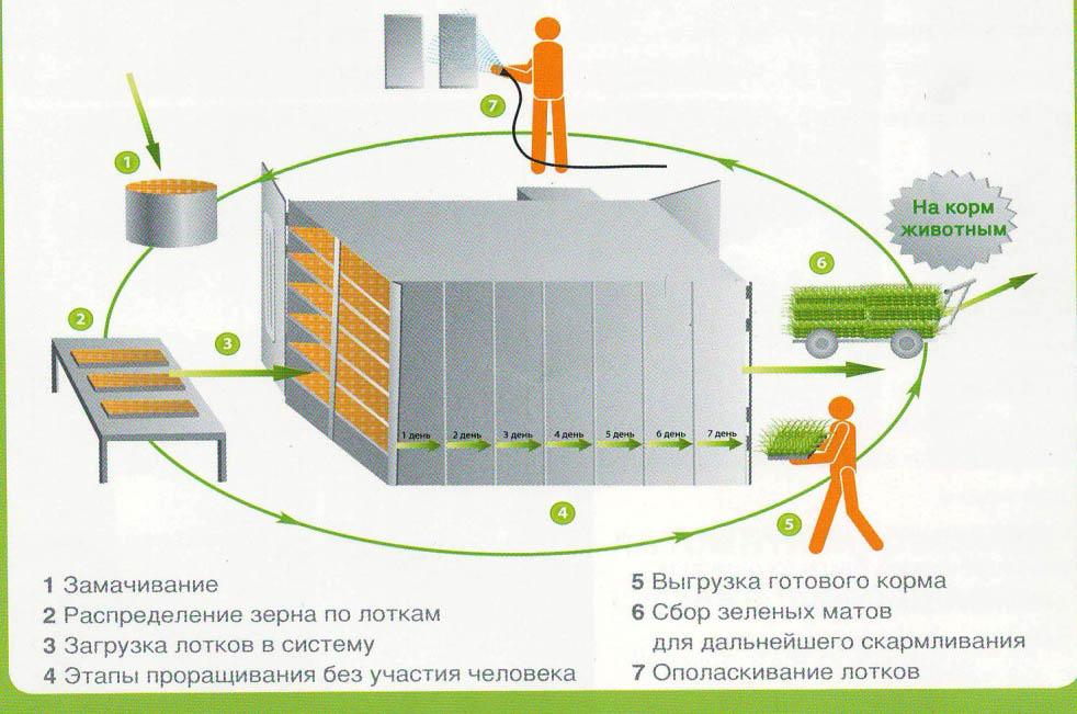 Технология производства зеленого корма