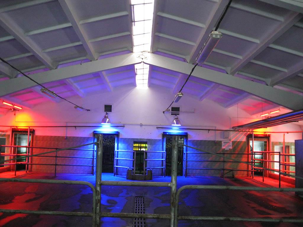 Установка подвесных АКФТ в накопителе для животных перед доильным залом