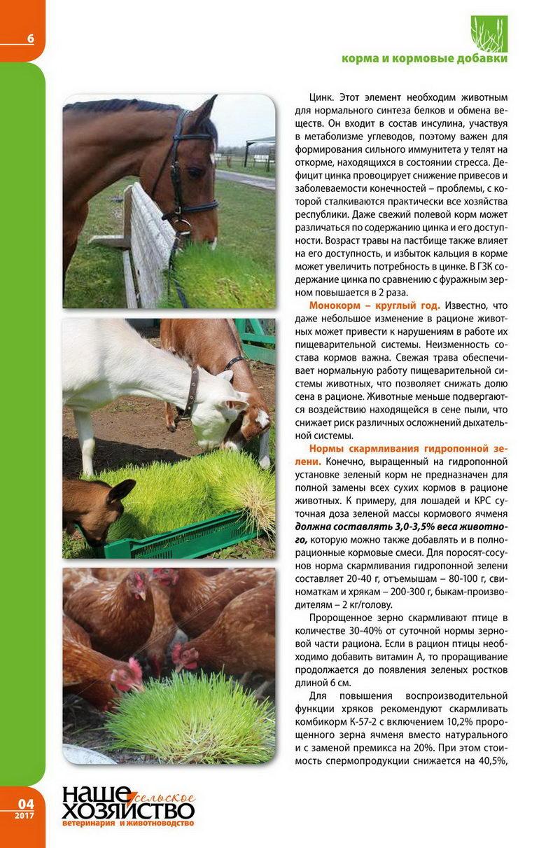 Зеленый гидропонный корм 5