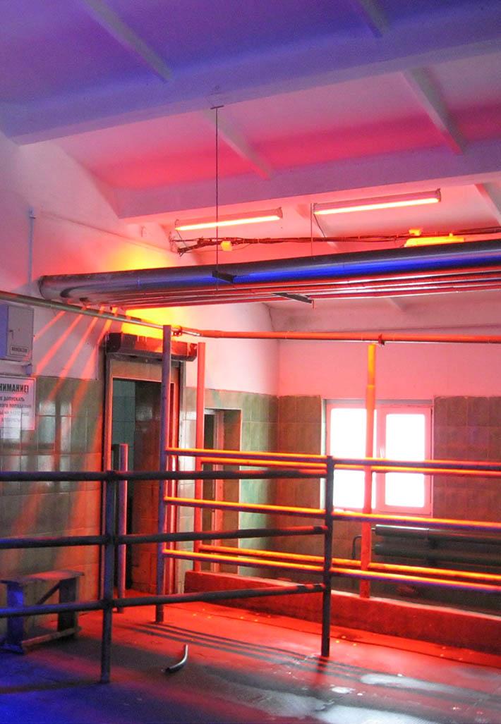 Обработка аппаратами АКФТ красного спектра действия на выходе из доильного зала