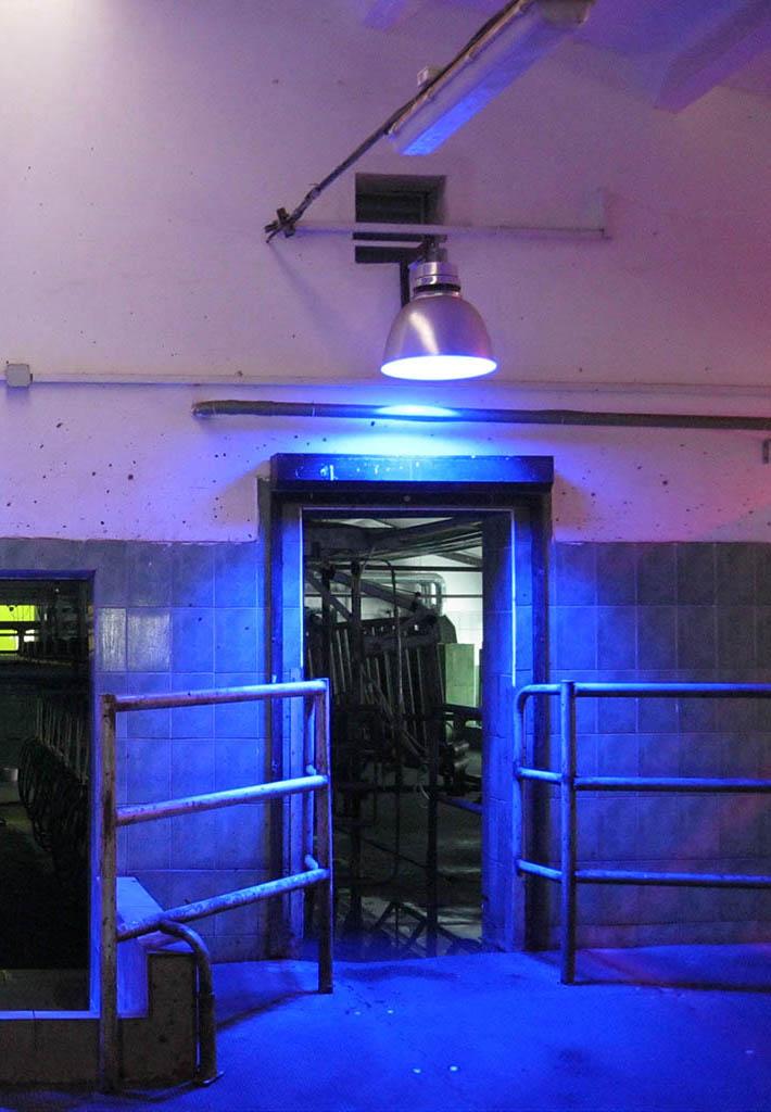 Размещение аппарата АКФТ синего спектра действия на входе в доильный зал